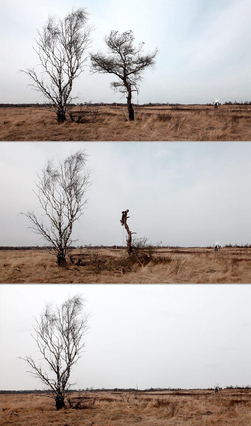 Fældning af træ, Hevring Skydeterræn, 2013.