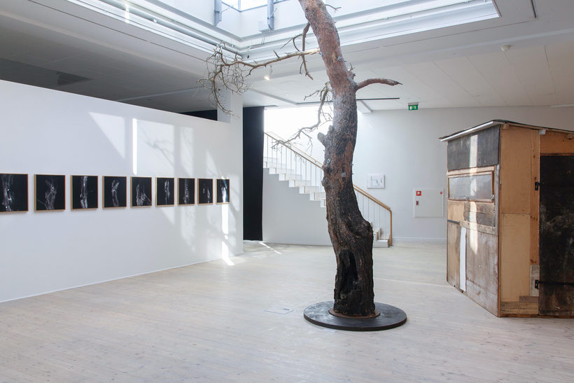 The Tree and The Projectile Installation Morten Barker