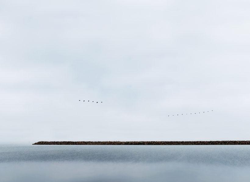 Flight of Birds Ardea cinerea and Phalacrocorax carbo Morten Barker