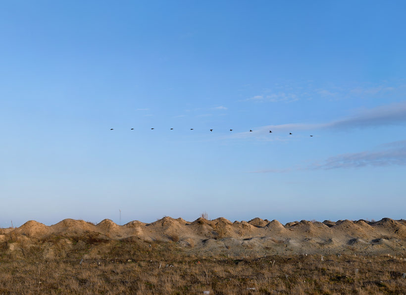 Flight of Birds Phalacrocorax carbo Morten Barker